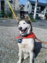 ジュディ犬2006