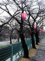 玉串川沿いに取り付けられたボンボリ