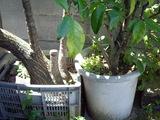 植木鉢の根元