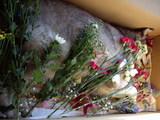 頂いたお花と一緒のジュディ1