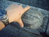 クサガメの大きさ測定(横幅)