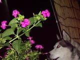 花とジュディ犬