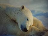 眠るシロクマ2