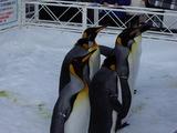 ペンギンパレード開始前