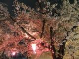 2012年4月10日玉串川の夜桜