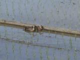 仲良く並んで休むカルガモの夫婦
