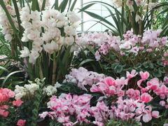 植物温室内のお花