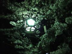 夜桜2013-9