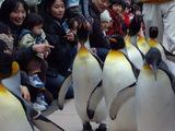 ペンギンパレード4