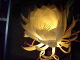 月下美人の花ライトアップ2