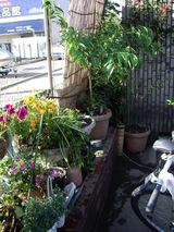 元花壇の上の植木達