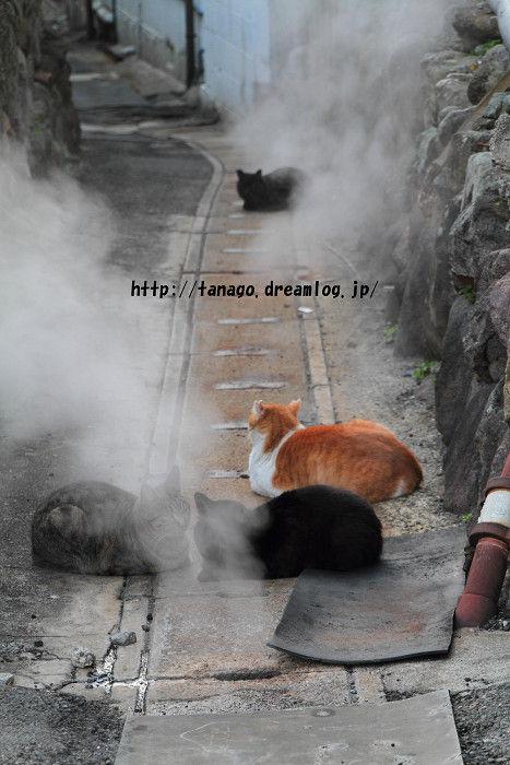 蒸し湯猫2