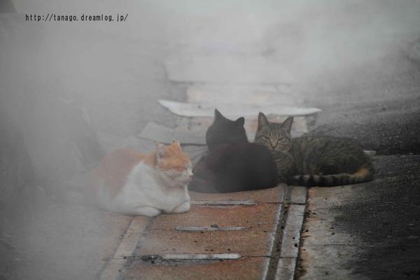 蒸し湯猫1 (5)