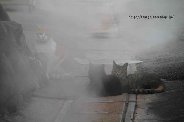 蒸し湯猫1 (4)