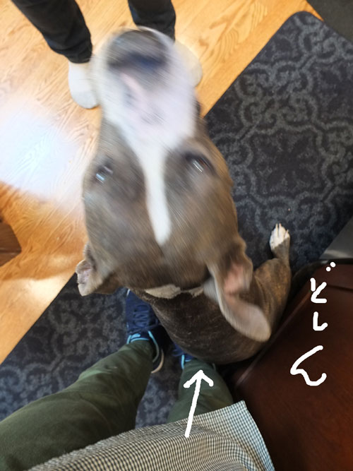 2018-06-11-shelby3