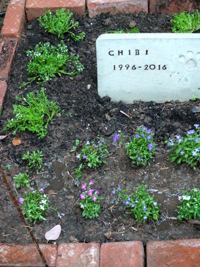 2017-09-05-chibi1