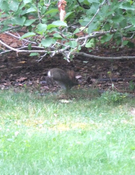 2017-06-13-rabbit2