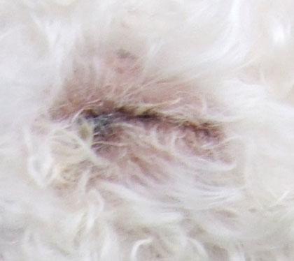 2015-04-01-eye