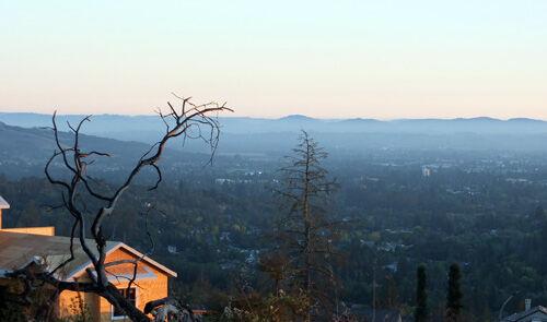 2021-09-13-trees5