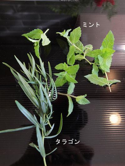 2018-11-06-cauliflower6