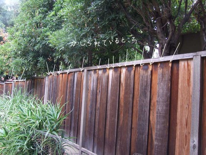 2014-11-19-fence