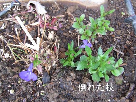2012_04_03-new