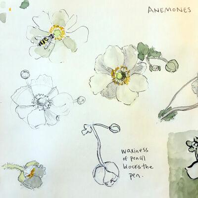 2021-09-24-anemone6