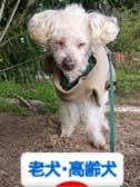 ブログ村シニア犬 高齢犬