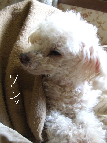 2012_04_26-dazed