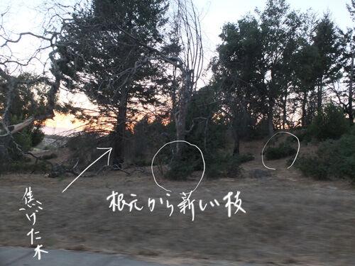 2021-09-13-trees2