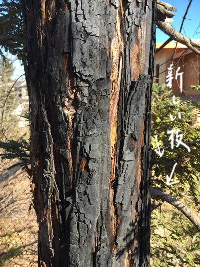 2021-09-13-trees4