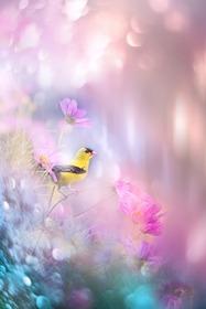 ヒカリの中の黄色い鳥