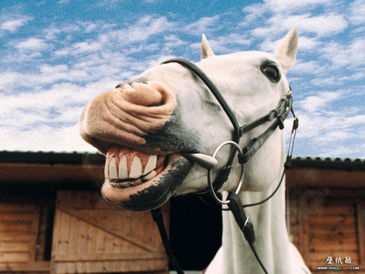 13358120871791573440laughing-horse_1024x768_3040