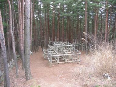 アスレチックの森