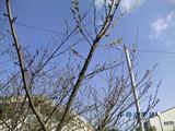 桑名西高校三重県公立高校当日2
