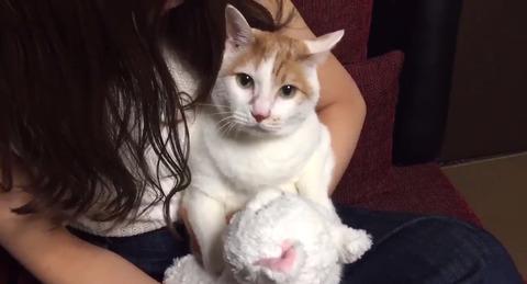 【悲報】なぎちゃんがまたメイさんを猫学校に無理矢理行かせようとするw【NMB48・渋谷凪咲】
