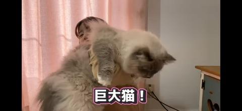 【ぱるるーむ】島崎遥香の飼い猫がギネス級の大きさでやばすぎるwww
