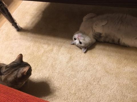 お年玉でネコを飼おうと思ってるんだが、メリットとデメリットを教えて