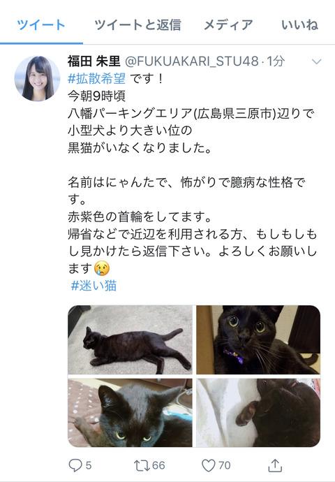 【悲報】STU48福田朱里の飼い猫が行方不明に