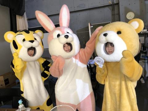 【画像】着ぐるみのさくらたんが可愛すぎるwwwwww【HKT48・宮脇咲良】