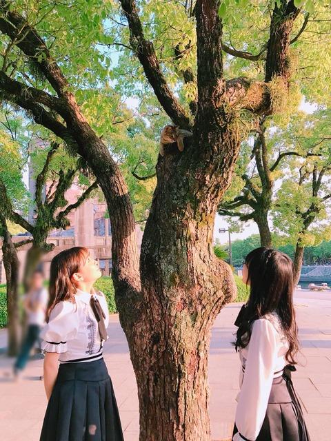【外道】みーおんとれなっちが木から降りられない猫を嘲笑う・・・【向井地美音・加藤玲奈】