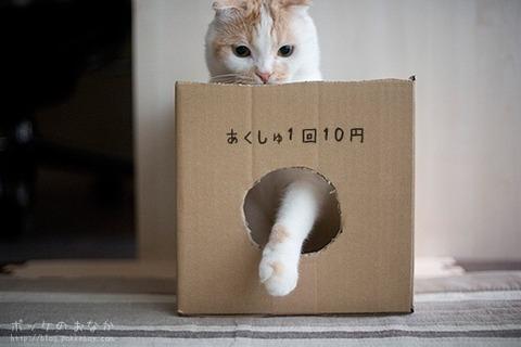 【AKB48】メンバーより可愛い猫で「猫48」を作って握手券つけたら売れるんじゃね?