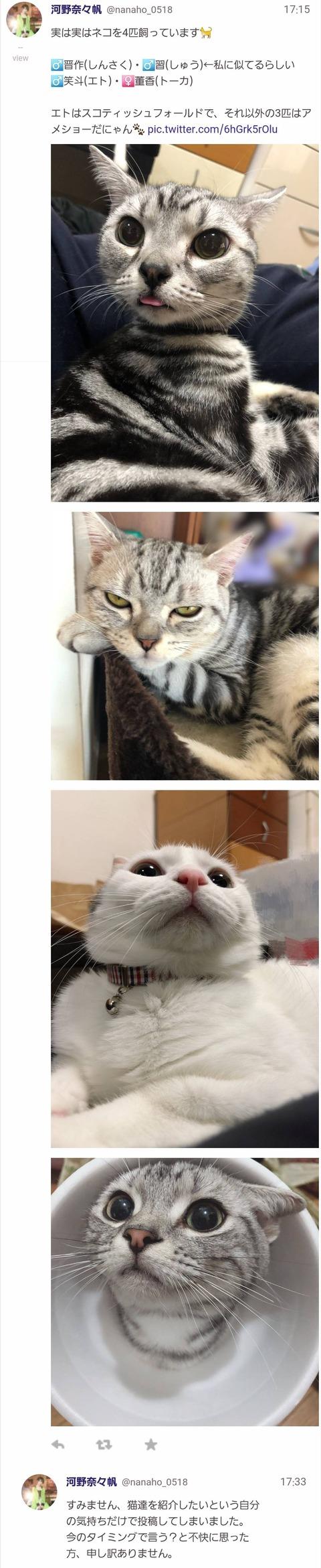 【悲報】NMB48河野奈々帆さん、猫を飼ってることを突然報告したらフルボッコで謝罪