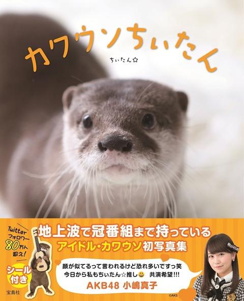 【AKB48】小嶋真子が大人気書籍「カワウソちぃたん」の帯コメントに寄稿www