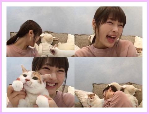 【AKB48総選挙】メンバーが飼ってるネコが立候補したら何位になると思う?