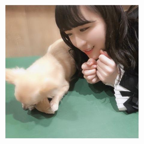【AKB48】川本紗矢は正直もっと人気爆発すると思ってた【さやや】