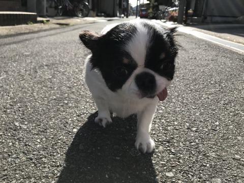 【悲報】元NMB48三秋里歩(小谷里歩)さん、仕事無さすぎて病む