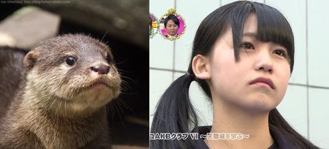 【AKB48G】ニホンカワウソっぽいメンバーと言えば誰?