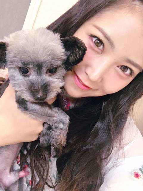 【AKB48】ゆきりん「ブツがめっちゃデカい犬を見た」【柏木由紀】