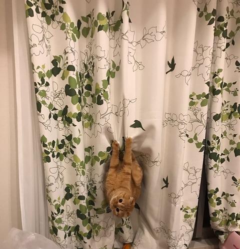 【HKT48】宮脇咲良が飼い猫、全く躾が出来てない